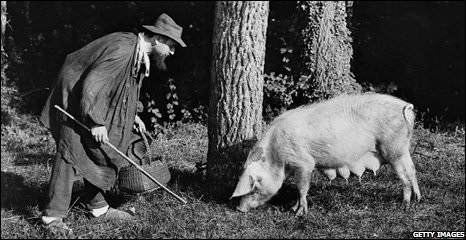 Truffle hunting with a pig in the old days