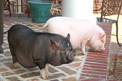 Miss Piggy & Charlie
