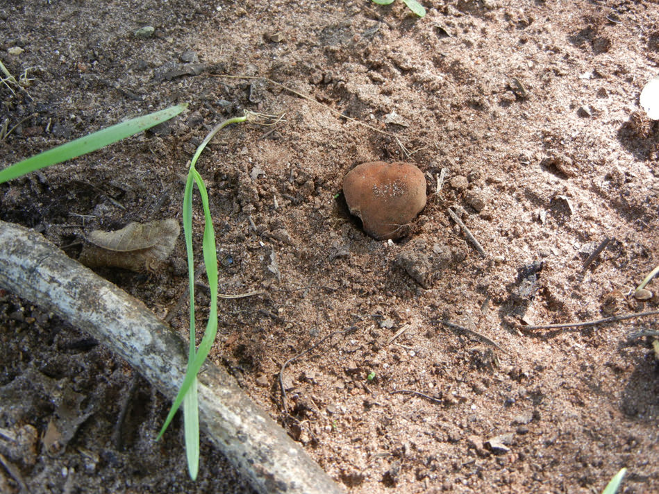 Susan-GA truffle Hunt pecan truffle ground