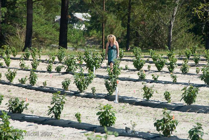 Susan surveying trees