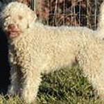 Olivia – The Truffle Hunting Dog!