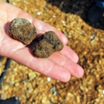 Back to Basics: So, what exactly is a truffle?