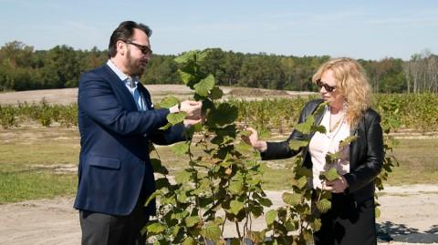Examining truffle tree with Chef Nick Stellino