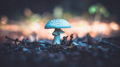 Mushroom in the woods