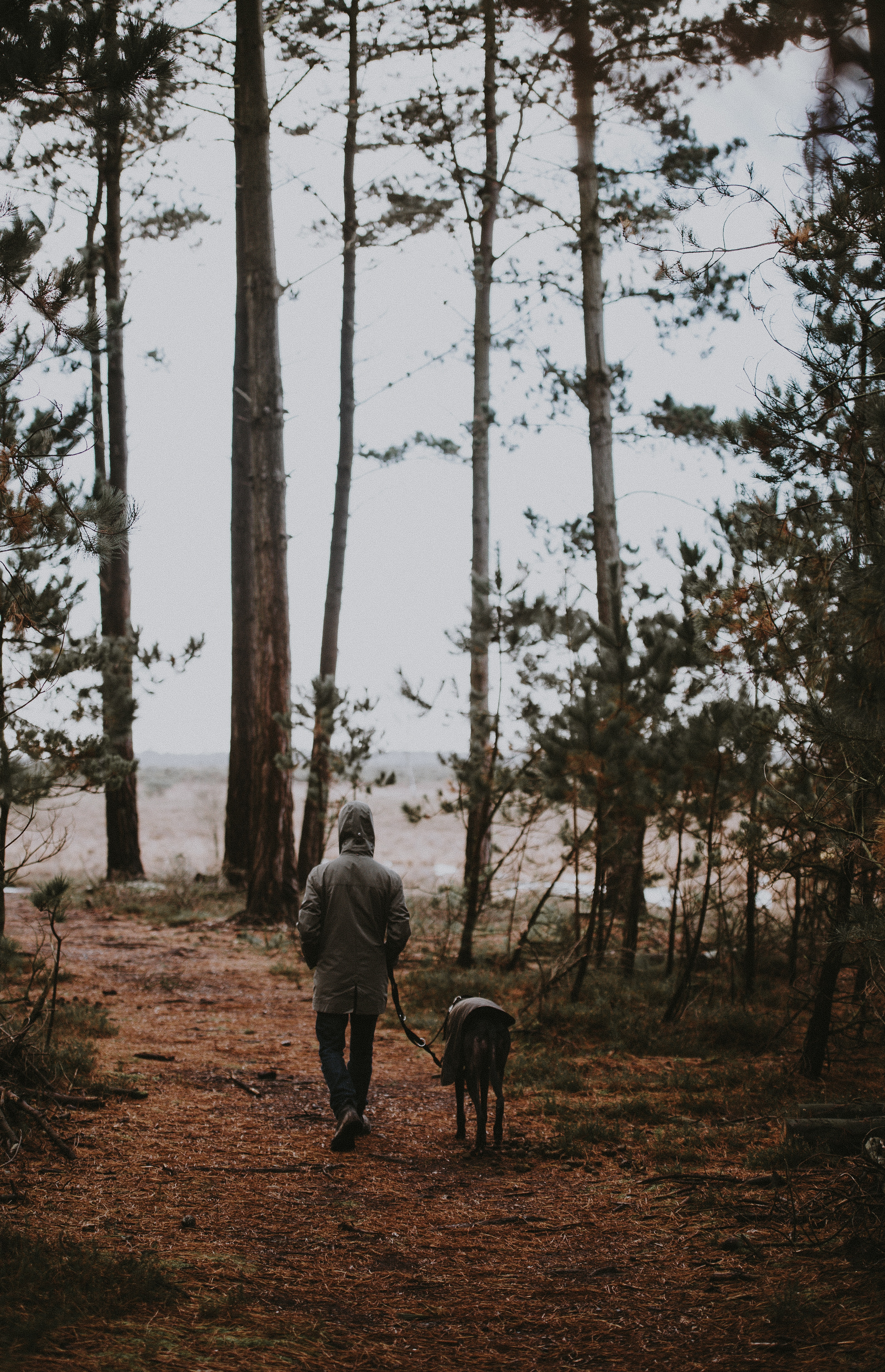 Man walking his dog in the woods